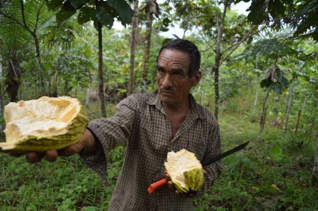 Smallholders like Adalberto Mitidieri grow many of the exotic fruits you'll find in Amaz