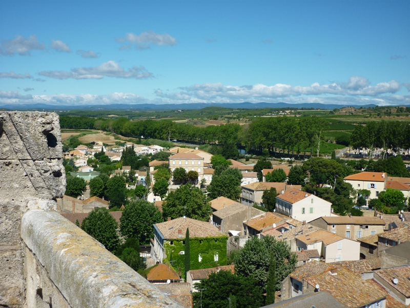 The plane trees along the Canal du Midi, seen here from the bell tower of the church in Capestang, support a good populations of nesting rollers. They have recently been ravaged by disease and most will be felled soon.