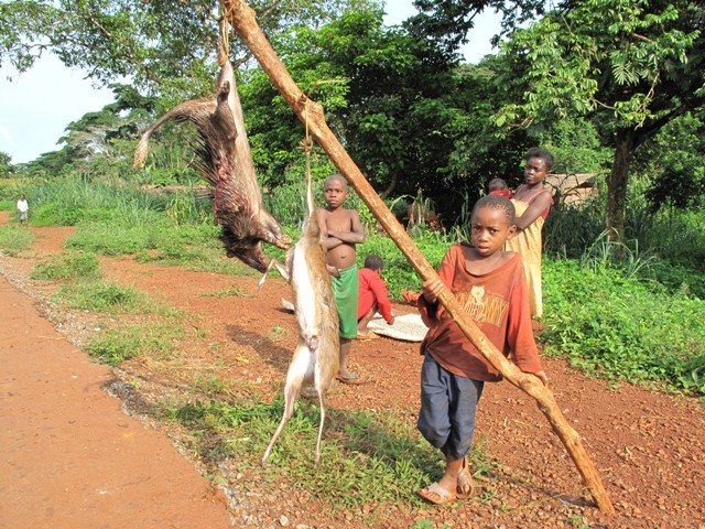 Porcupine and antelope for sale on the road back to Yaounde