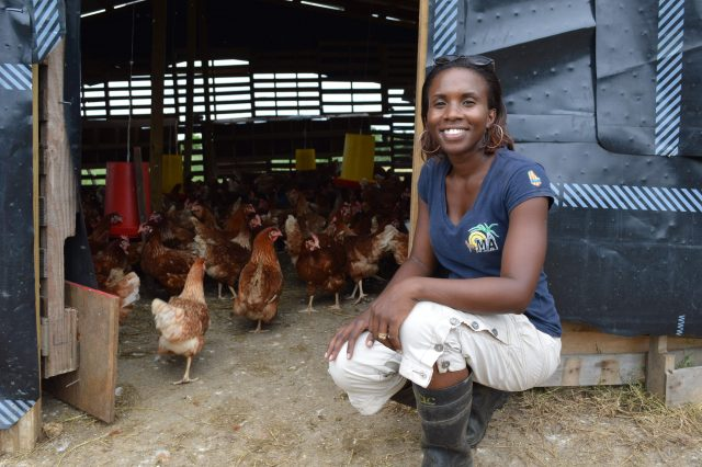 Joanna is supplying several chefs with free-range eggs and a range of vegetables and will soon have lambs for sale from her Barbados blackbelly ewes.